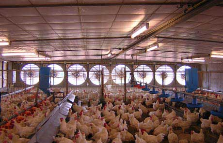 Application-Poultry-Farming-Automation