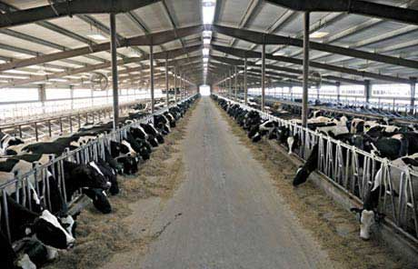 Application-Dairy-Farming-Automation